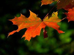 image002-10-300x225 京都嵐山の2017年紅葉おすすめコース!所要時間と電車でのアクセス情報