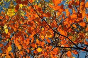 image002-13-300x199 京都東福寺の2017年紅葉の見ごろとアクセス情報!拝観料と時間とは?