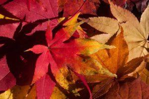 image004-10-300x199 京都清水寺の2017年紅葉の見どころ!拝観時間やアクセス・駐車場は?