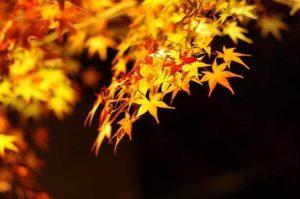 image002-12-300x199 京都貴船神社2017年紅葉の見ごろは?ライトアップの時間はいつ?