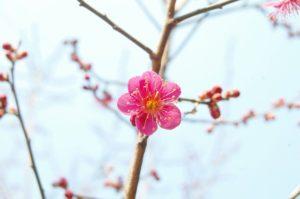 image001-300x200 3月の季語で春の時候の挨拶を!季節の手紙の文例・書き出しから結びまでを紹介