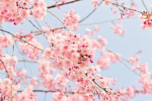 image001-300x200 春の季語を使った時候の挨拶文例!4月に書く手紙の書き出しと結びとは?
